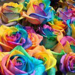 DIY: rainbow flowers