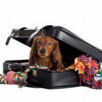 Cães em viagens de avião