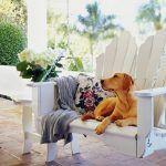Cuidados com seu cãozinho no verão