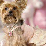 Acessórios Fashion para Cães e Gatos