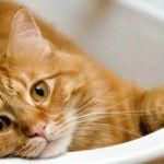 Produtos para o cuidado dos gatos