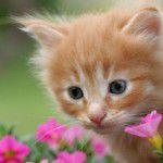 Plantas e pets: harmonia em casa
