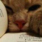 Gato ciumento: como lidar?