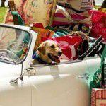 Pets na mala: os mascotes vão ou ficam?