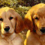 Prevenção do câncer canino