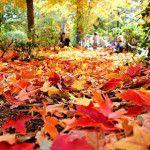Bem vindo, outono!
