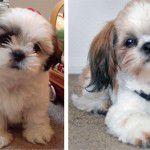 Escolhendo um cachorrinho de estimação!