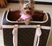 Bolsas para carregar cachorrinhos {pet bags}