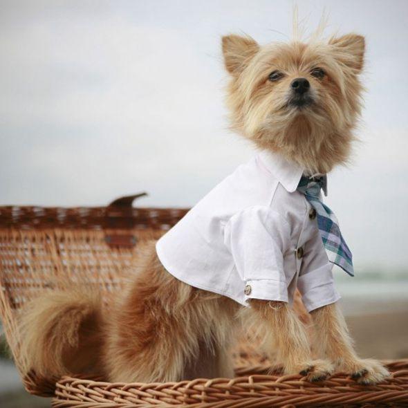 custom-dog-ties-580x580 Nossos pets na moda!