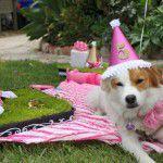 puppy-first-birthday-party-ideas-580x386-150x150 Quiz para convidados: você sabe o que é?