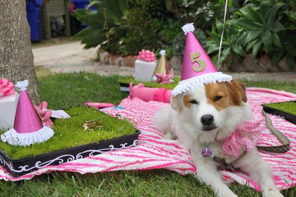 puppy-first-birthday-party-ideas-580x386 Aniversário dos bichinhos de estimação