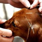 acupuntura-150x150 Casamento Nathalie e Romeu
