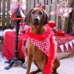 Dia dos Pets Namorados {Puppy Love}