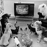 CachorroTV-150x150 Coprofagia canina