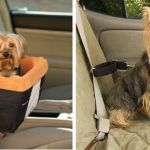 Cadeirinhas de carro para cachorros