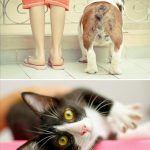 Book de Pets