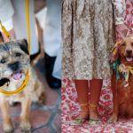 pets-casamento08-150x150 Pets no Bolo