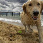 cachorro_toy_02-150x150 {Prato do fim de semana} Farofa a La Varanda