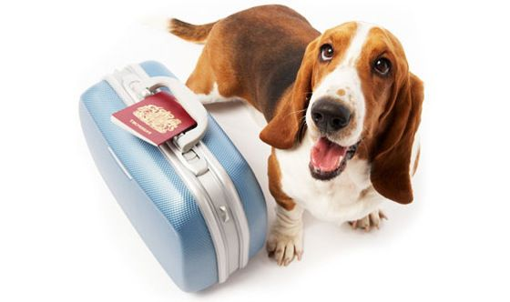 cachorros-viajando1 Viajando com os pets
