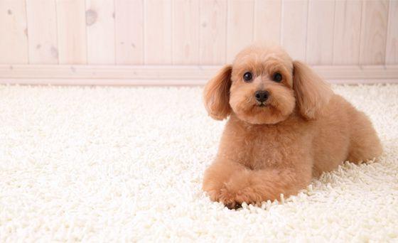 cheiro_cachorro_01-1 Seu cachorrinho tem mal cheiro?