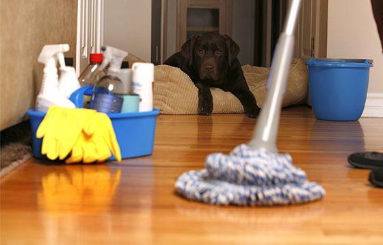cheiro_cachorro_03 Seu cachorrinho tem mal cheiro?