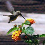 Flores para os passarinhos