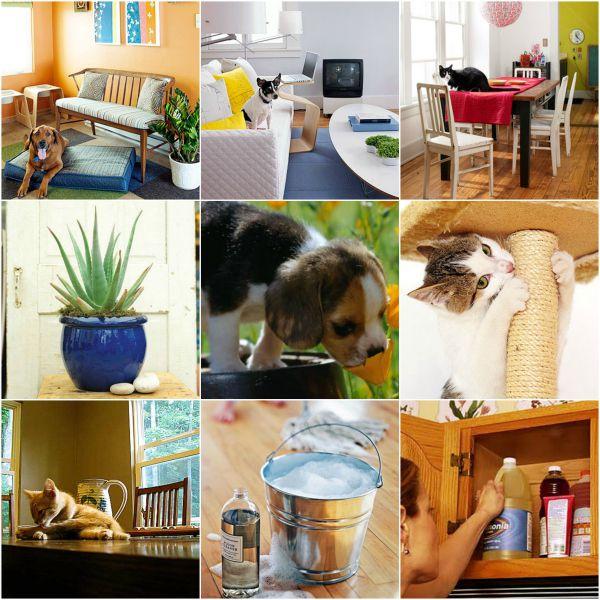 petfriendlyhouse3 Sua casa é pet friendly?