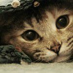 scratchlounge_destaque-150x150 Lancheira saudável