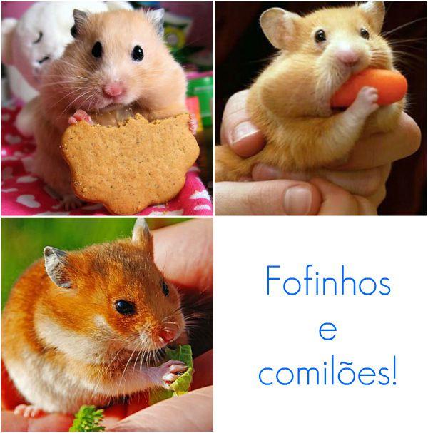 hamster1-1 Hamster - Dicas e cuidados