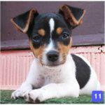 goddogforchildren02-150x150 Chopeira em Casa
