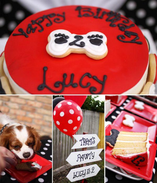 festacachorrolucy01-1 Pet Festa - Aniversário da Lucy