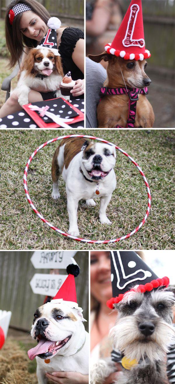 festacachorrolucy02 Pet Festa - Aniversário da Lucy
