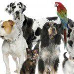 Como os animais realmente enxergam