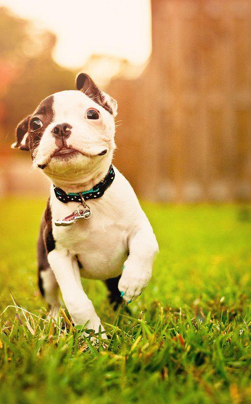 happy-dog Cuidado com as patinhas!