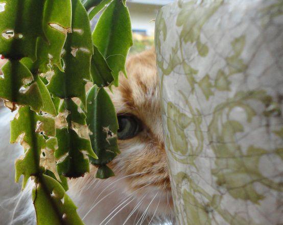 11-2 Plantas e pets: harmonia em casa