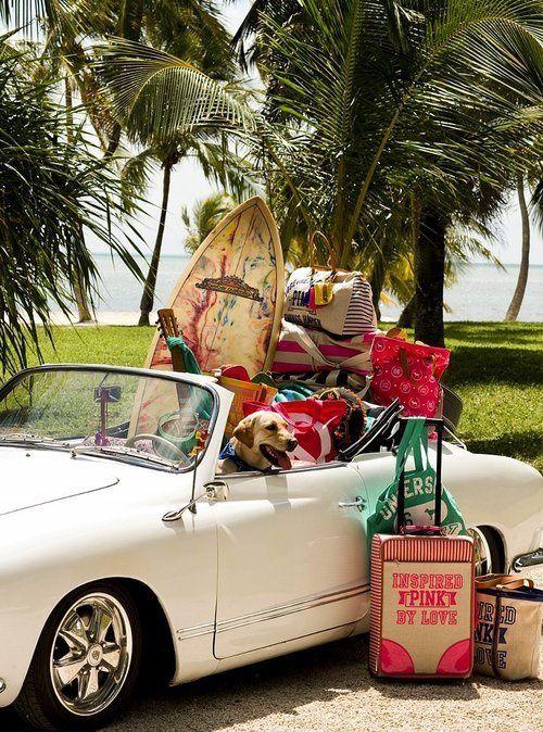 12-1 Pets na mala: os mascotes vão ou ficam?