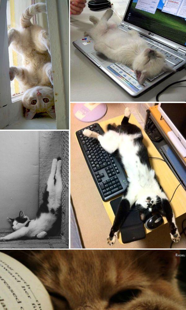 montagem-gatos Gato ciumento: como lidar?