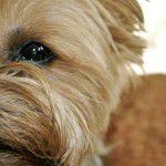 6493880695_4297b97154_b-150x150 NamaStay, uma festa canina com yoga