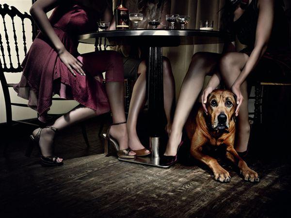 mulheres-na-mesa-do-bar-e-cachorro Happy hour com seu pet