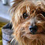 8150207111_19aa0044e3_z1-150x150 NamaStay, uma festa canina com yoga