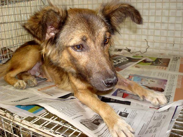 a-a-cachorros-para-adoc3a7c3a3o Está na hora de adotar!