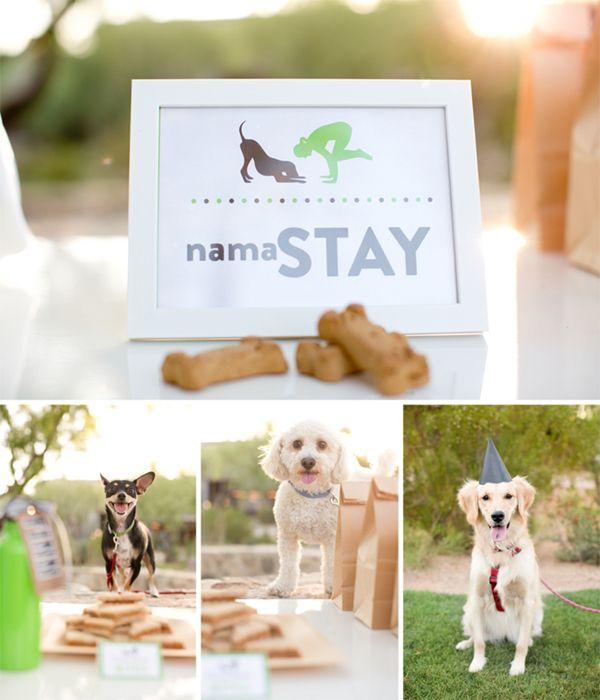 1 NamaStay, uma festa canina com yoga