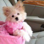Conforto no carro para o seu pet