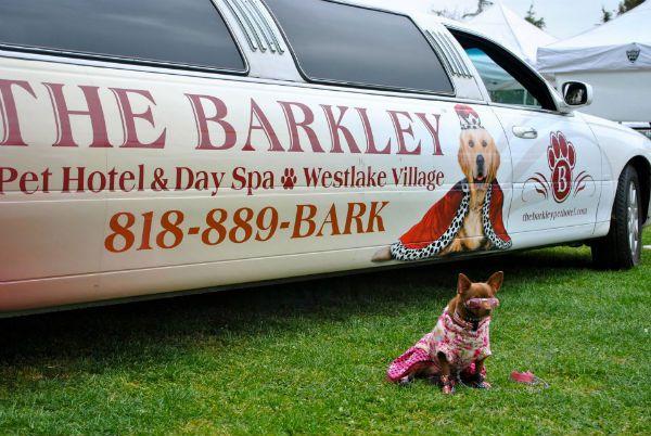 pethotel_barkley_04 Hotel de luxo para pets