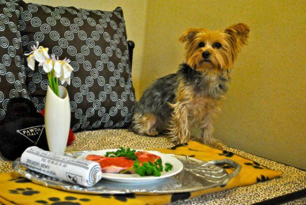 pethotel_barkley_1 Hotel de luxo para pets