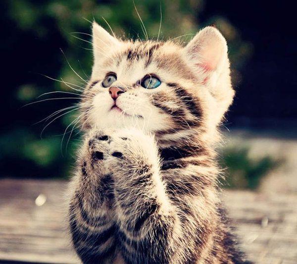 castracao-gato A idade certa para castrar
