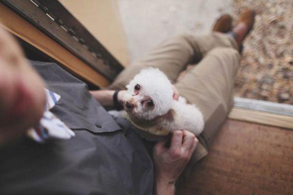 cachorro-no-casamento (1)