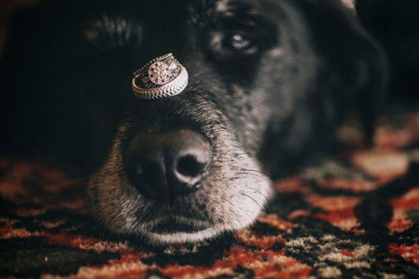 cachorro-no-casamento (10)