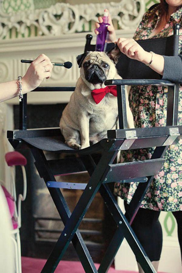 cachorro-no-casamento (3)