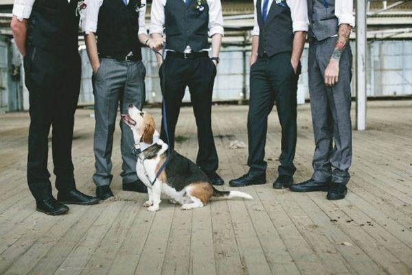 cachorro-no-casamento (5)